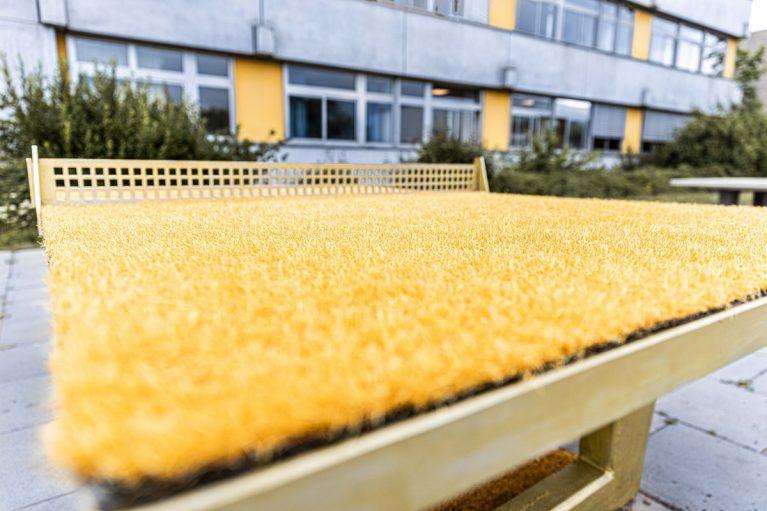 Tischtennisplatte mit Teppich
