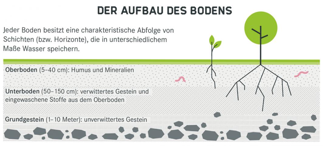 Infografik zum Aufbau des Bodens in seinen Schichten